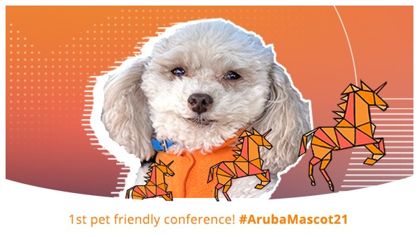 Sir Teddy, the Aruba dog, posing for the virtual photo booth at Atmosphere